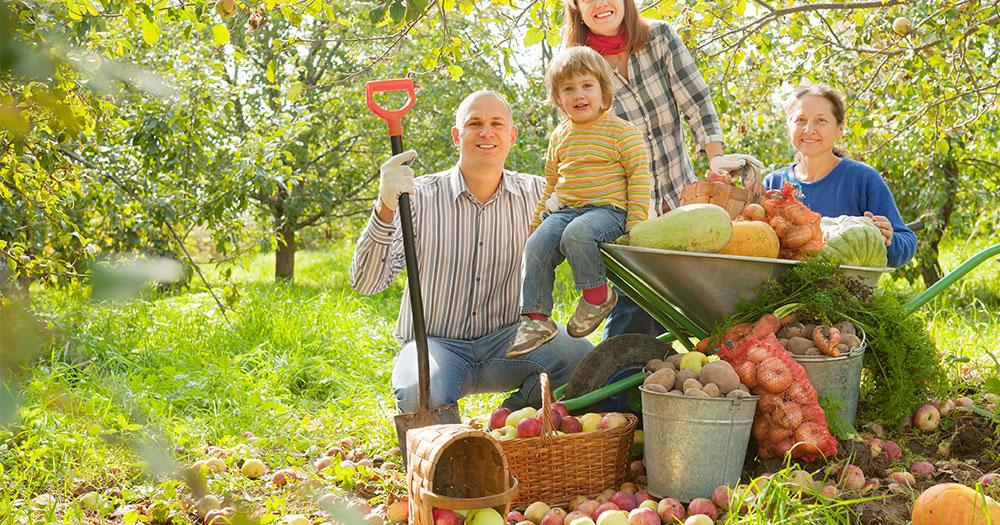 Ưu điểm của thực phẩm organic