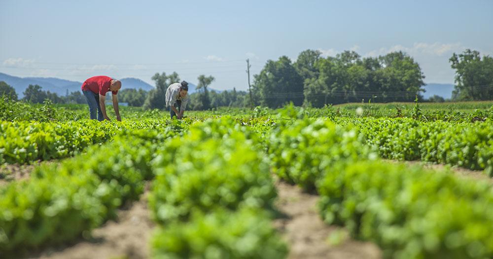 Nhược điểm của thực phẩm organic
